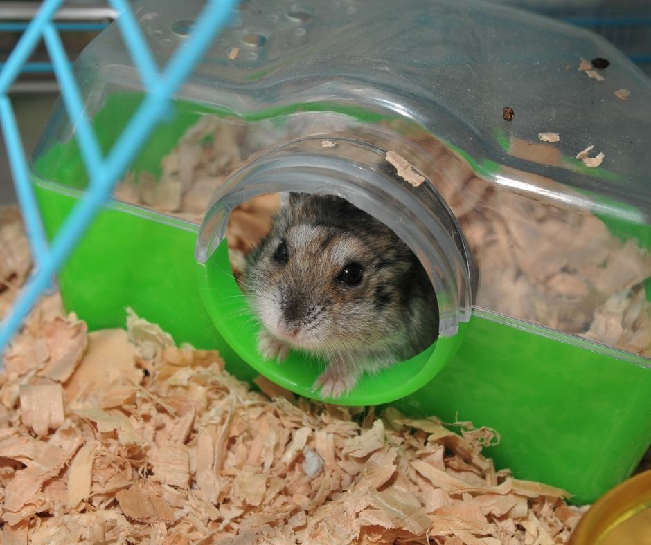 Hamster Cage From Smelling, Can You Use Shredded Paper For Hamster Bedding