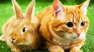 Do Cats Attack and Eat Rabbits